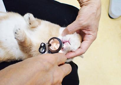 ウサギは病気になった時、ワンちゃんやネコちゃんに比べて治療や看護が大変です。
